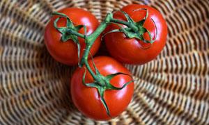 篮子里的三枚番茄特写摄影高清图片