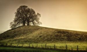 山坡上的树木自然风景摄影高清图片