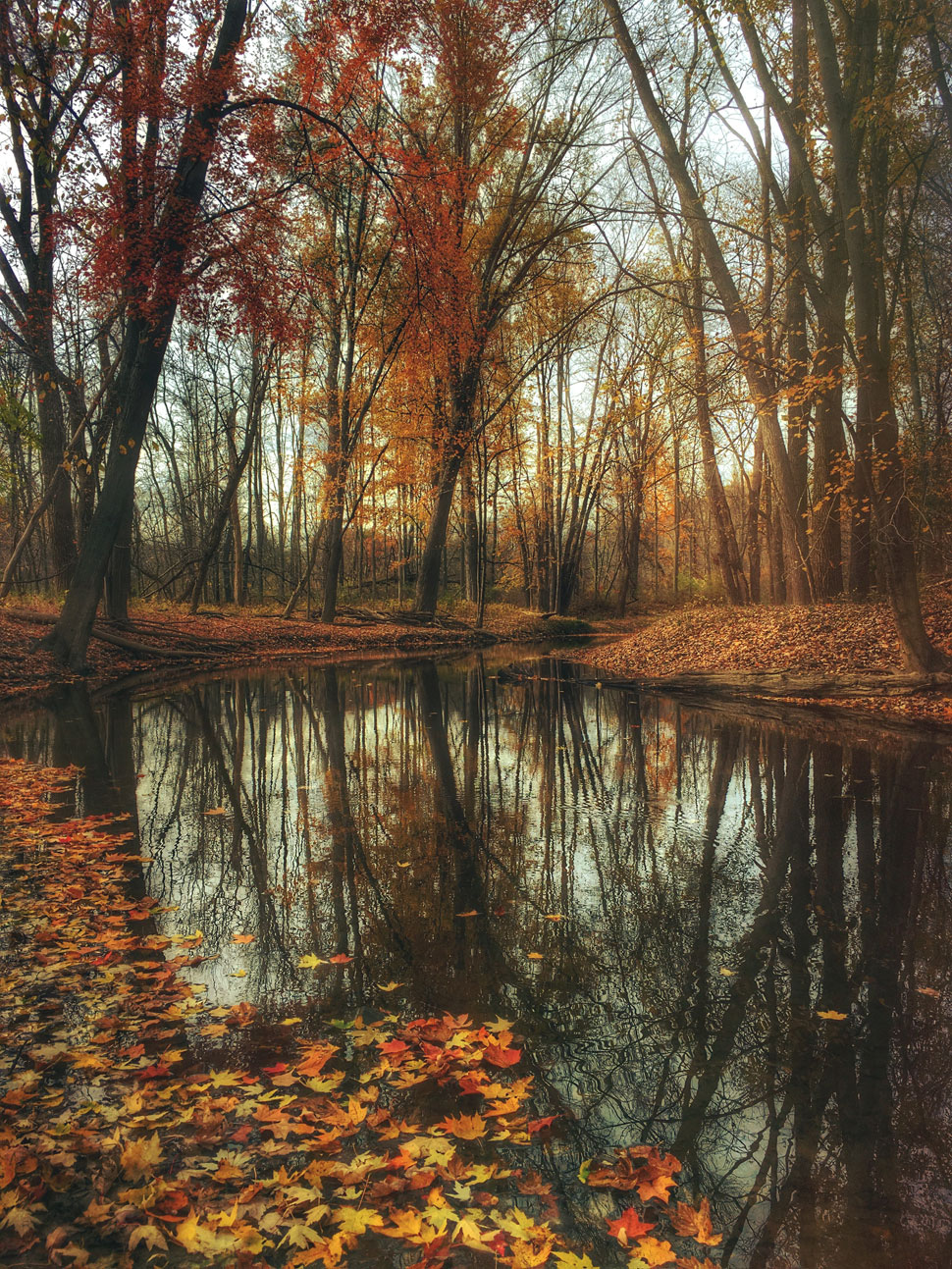 cc0; 关 键 词: 高清摄影大图图片素材自然风景风光树木大树秋天树叶