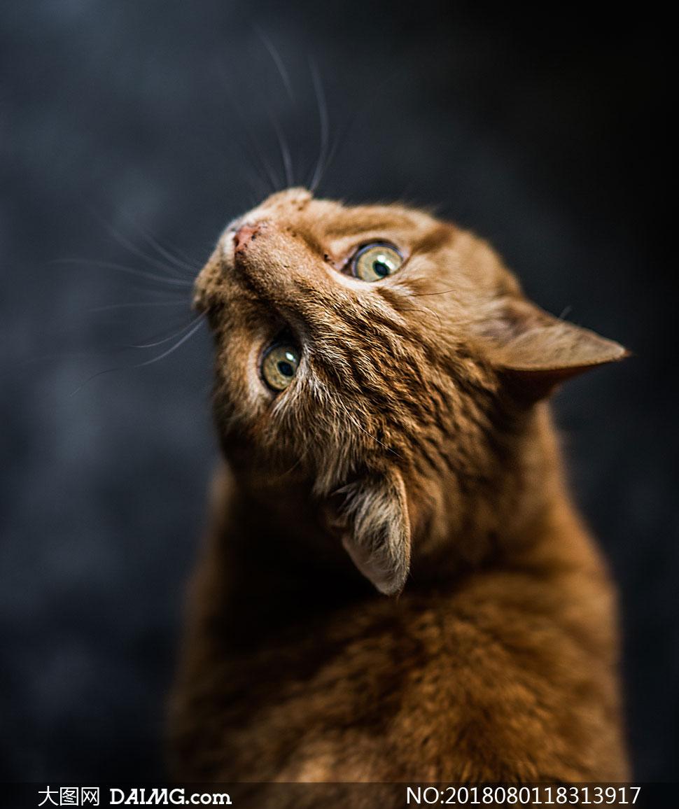cc0; 关 键 词: 高清摄影大图图片素材近景特写微距动物可爱猫咪小猫