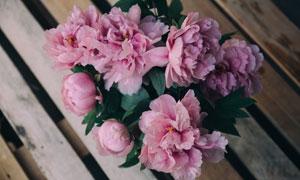 长椅上的粉色花朵特写摄影高清图片
