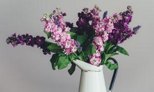 插洒水壶中的花朵特写摄影高清图片