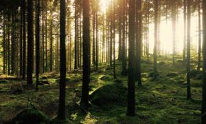 地上长满了青苔的树林摄影高清图片