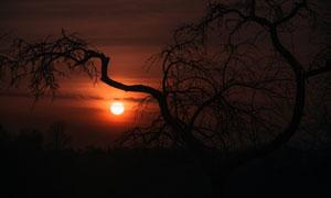 黄昏日落晚霞与树木的剪影高清图片