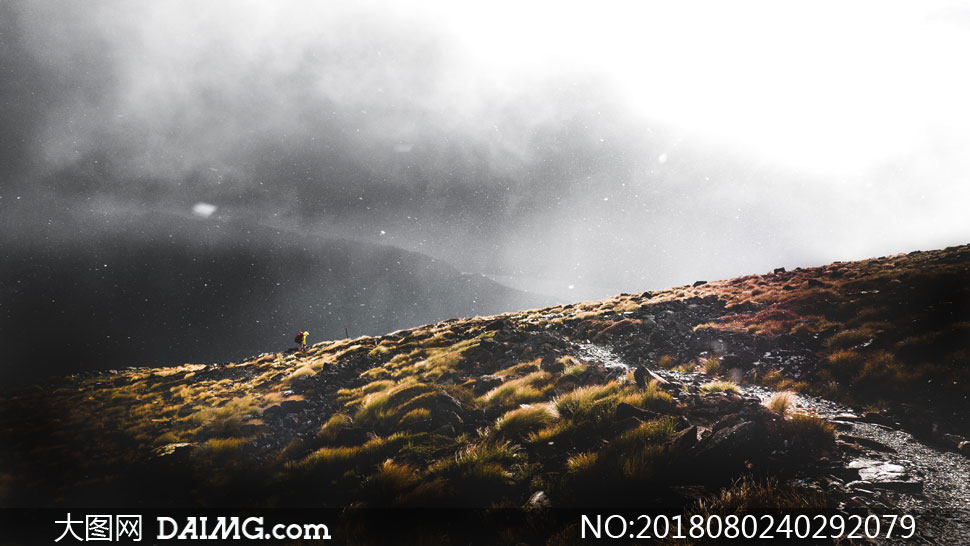 cc0; 关 键 词: 高清摄影大图图片素材自然风景风光飘雪雪花下雪草地