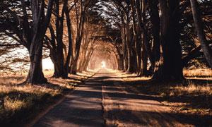 郊外隧道般的道路树木摄影高清图片
