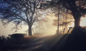 路边大树自然风景逆光摄影高清图片