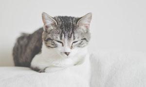 眯缝着双眼的犯困猫咪摄影高清图片