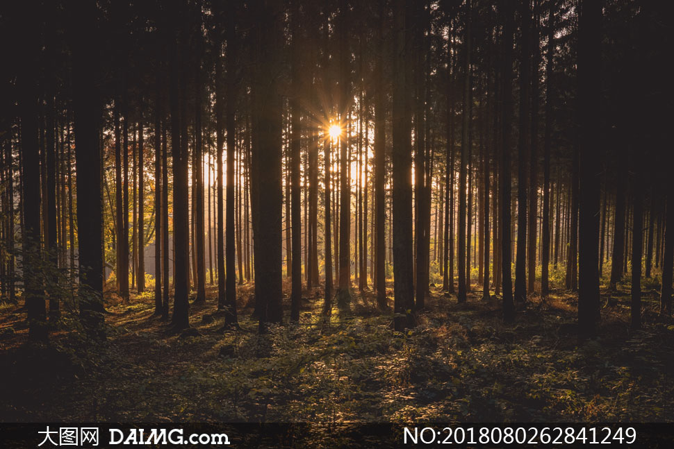 关 键 词: 高清摄影大图图片素材自然风景风光树木树林草地阳光逆光