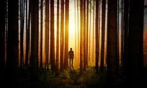 暖阳照耀下的林中人物摄影高清图片