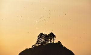 空中飞鸟与山顶的树木剪影高清图片