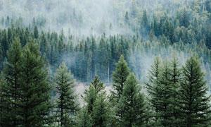 山间浓雾中的树林风光摄影高清图片