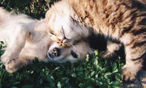 在嬉戏打闹的小猫小狗摄影高清图片