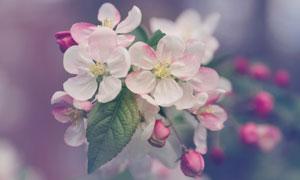枝头上盛开的鲜花特写摄影高清图片
