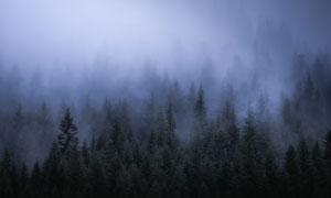 雾中能见度较低的树林摄影高清图片