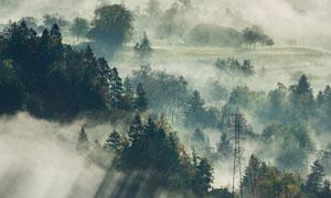 山坡上浓雾之中的树林摄影高清图片