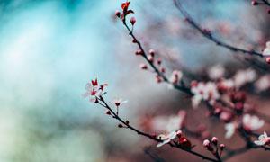 树枝上绽放的小花特写摄影高清图片