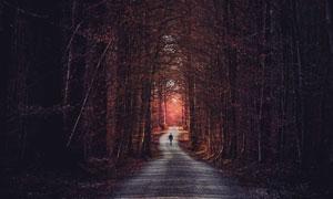 黄昏树林中的小路风光摄影高清图片