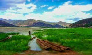 泸沽湖边美丽湿地和绿草摄影图片