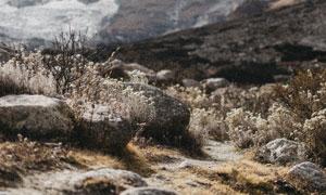 雪山脚下的岩石与草等植被高清图片