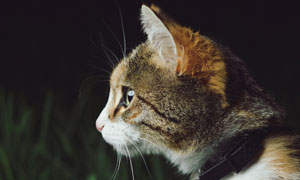 睁大眼睛的喵星人特写摄影高清图片