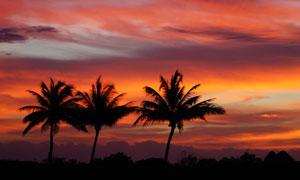 黄昏晚霞群山椰树风景摄影高清图片