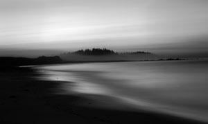 弥漫着雾气的大海树林摄影高清图片