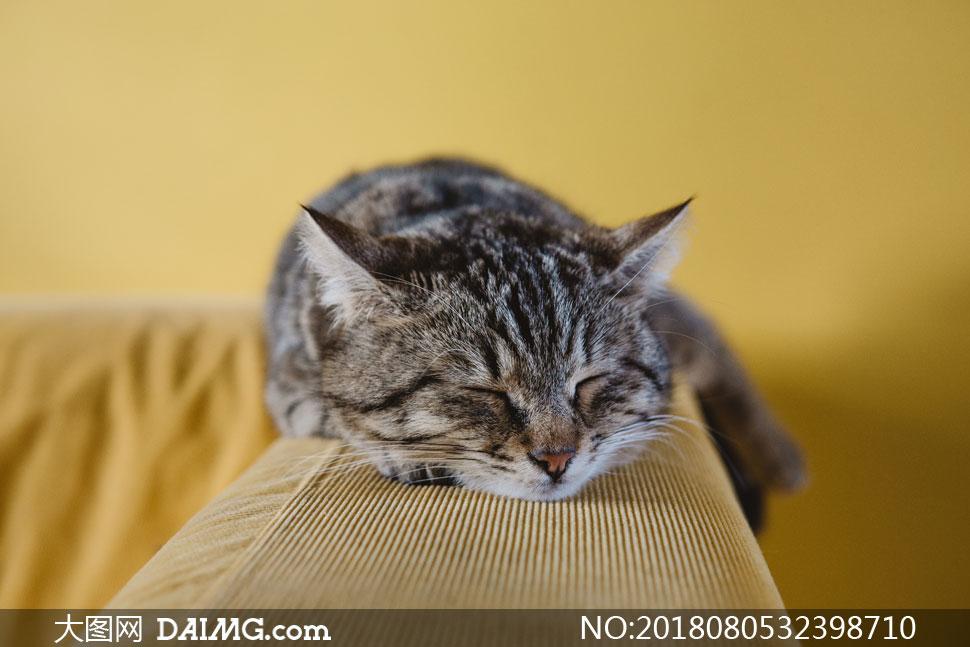摄影大图图片素材近景特写微距猫咪小猫可爱睡觉入睡趴着沙发喵星人
