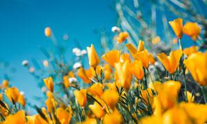 黄色花卉植物近景特写摄影高清图片