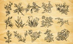 复古花朵和花枝装饰PS笔刷