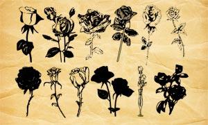 25款玫瑰花和花枝PS笔刷