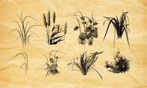 花朵植物和草丛PS笔刷