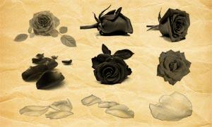 玫瑰花和玫瑰花瓣PS笔刷