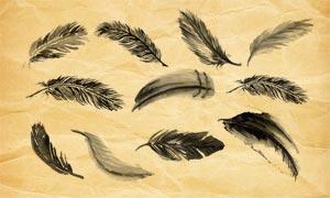 动物和鸟类羽毛PS笔刷