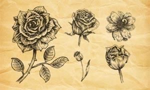 高清晰復古花朵PS筆刷