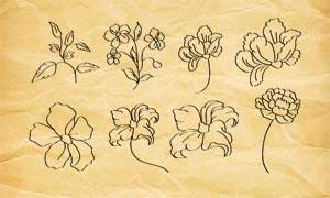 花朵轮廓PS笔刷