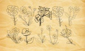 手繪花朵輪廓PS筆刷