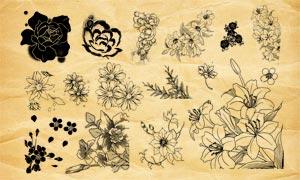唯美手繪花朵裝飾PS筆刷