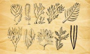 海藻和藻類植物PS筆刷