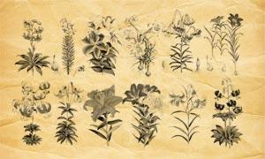 百合花和花枝花束PS筆刷