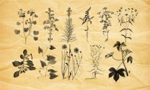 植物藤蔓和花枝PS筆刷V1