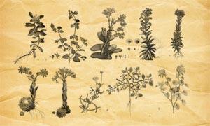 植物藤蔓和花枝PS筆刷V2