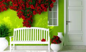 花瓶长椅与墙上的红色花藤高清图片