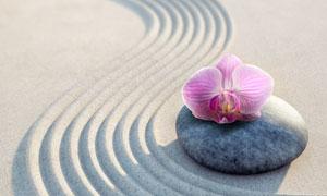 石头上的一朵兰花特写摄影高清图片