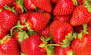 大个头的香甜草莓特写摄影高清图片