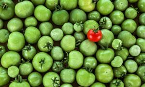 西红柿与未成熟的番茄摄影高清图片