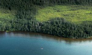 水边茂密树丛自然风光摄影高清图片