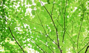 树枝上的绿叶近景特写摄影高清图片