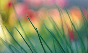 炫彩光斑映衬下的植物摄影高清图片