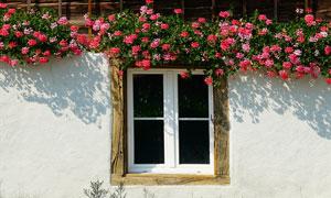 用鲜艳花朵装饰的窗户摄影高清图片